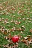 Rött äpple på grönt gräs Arkivbild