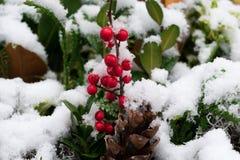 Rött bär i vinter Royaltyfria Bilder