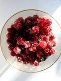 Rött bär med socker Royaltyfri Foto