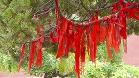 Rött band som slås in runt om filialer, frodigt ginkgoträd i bris, stam, skog, trän stock video