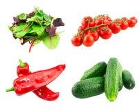 Rött blad för blandad sallad, röd chard för spenat som är ny Arkivfoto