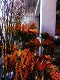 Rött blomma Royaltyfria Bilder
