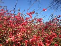 Rött blommahav Arkivbilder