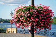 Rött blommahuvud i blomkruka på den soliga dagen för stålstolpe, goda för vykort arkivfoto