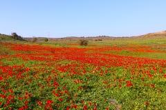 Rött blommalandskap Arkivfoto
