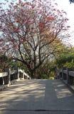 Rött blommaträd och bro Royaltyfri Foto