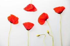 Rött blommaval Arkivfoto