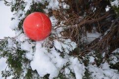 Rött bollsammanträde i träd med snö Royaltyfri Fotografi