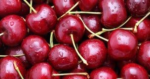 Rött Cherry Arkivbilder