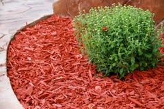 Rött dekorativt skäll för komposttäckning royaltyfri foto