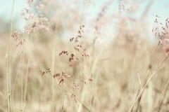 Rött födelse- gräs (bli grund abstrakt bakgrund), Arkivfoto