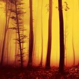 Rött genomdränkt skoglandskap för magisk brand Arkivfoton