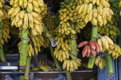 Rött, gult och grönt hänga för bananer som är till salu på en marknad, Kand royaltyfri bild