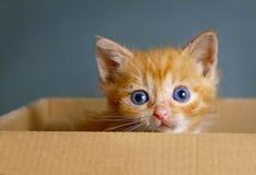 Rött hår en gammal liten kattunge för månad arkivfoto