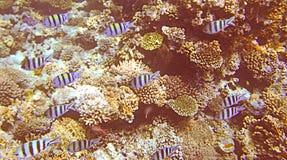 rött hav Royaltyfria Bilder