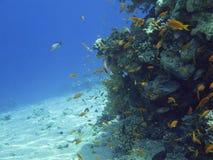rött hav för coralreef Arkivfoton