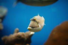 rött hav för fisk Royaltyfri Bild