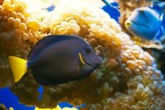 rött hav för fisk Arkivfoto