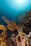 rött hav för korallbrand Royaltyfri Fotografi