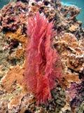 rött hav för ventilator royaltyfri bild