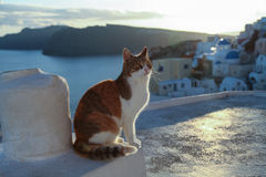 Rött kattsammanträde på väggen nära havet Royaltyfri Foto