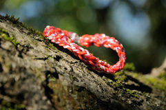 Rött klibbigt armband Arkivbild