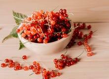 rött moget för bärvinbär Arkivfoto