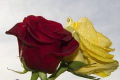 Rött och gult Royaltyfria Bilder