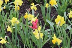 Rött och gult Royaltyfria Foton