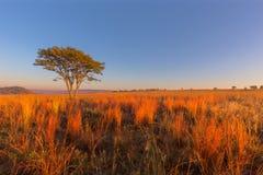 Rött och gult färgat gräs på soluppgång arkivfoto
