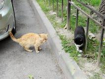 Rött och svart med vit spots katter plats på en stadsgata arkivbilder