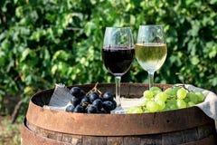 Rött och vitt vin med druvor i natur Arkivfoton