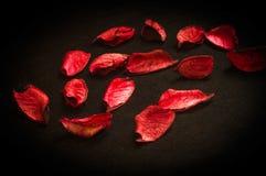 Rött på svart Royaltyfria Foton