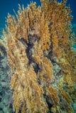 rött revhav för korall Arkivbilder