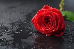 rött rose vatten för härliga liten droppe Arkivfoton