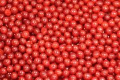 Rött saftigt bär Royaltyfria Bilder