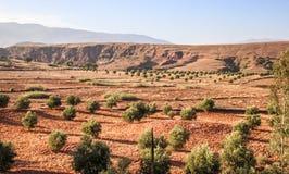 Rött sandigt landskap med gröna buskar Royaltyfri Foto