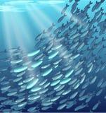 rött skjutit skolahav för fisk Royaltyfria Bilder
