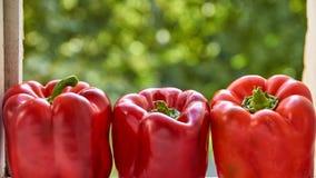 Rött slut för spansk peppar tre upp på suddig färgrik grön bakgrund med kopieringsutrymme Spansk peppar på suddigt grönt textursl Royaltyfri Foto