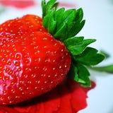 Rött stawberry royaltyfri foto