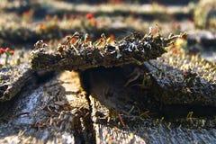 Rött svamptak Fotografering för Bildbyråer
