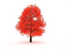 Rött träd Arkivbilder