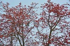 Rött träd för siden- bomull fotografering för bildbyråer