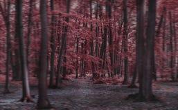 Rött träd Forest Amazing Dream Arkivfoto