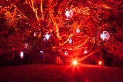 Rött träd med snöflingor Arkivfoto