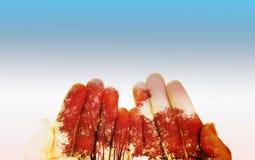 Rött träd på gömma i handflatan Arkivfoto