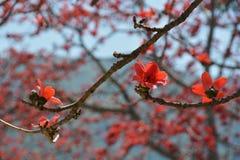Rött trädslut för siden- bomull upp royaltyfria bilder