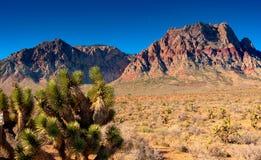 Rött vagga Caynon, Nevada Arkivbild