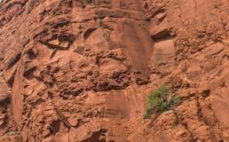 Rött vagga nationalparken, Sedona, Arizona Royaltyfri Foto