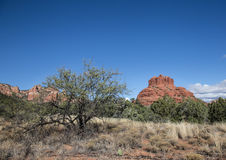 Rött vagga nationalparken, Sedona, Arizona Royaltyfria Bilder